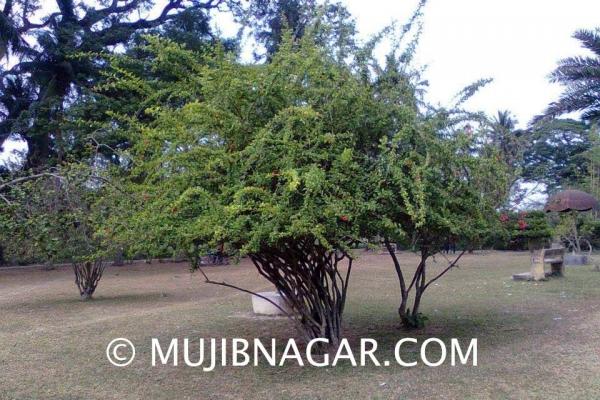 amjhupi-nilkuthi_0094CB0933B-A8EF-23F2-AC5B-8BB1BF42918F.jpg